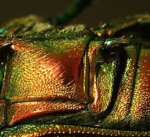 Colorfull Carapace. by Dustinit