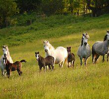 Mares & Foals by Fleur Hallam