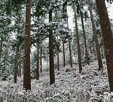 Snow in the forest by Guy Carpenter
