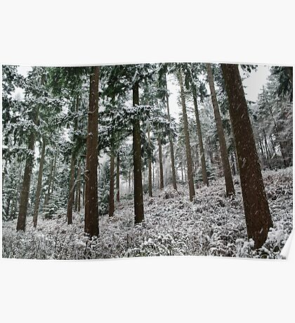 Snow in the forest Poster