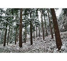 Snow in the forest Photographic Print