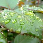Rain drops like tears by Amy Dee