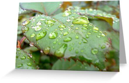 Rain drops like tears by Amy Dee
