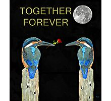 Together Forever Kingfisher Photographic Print