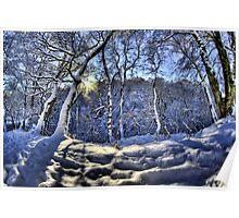 Sun through the snow Poster