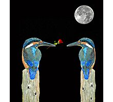 Kingfisher with rose Photographic Print