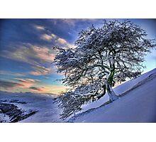 Icy tree Photographic Print