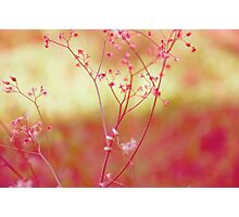 In the lawn: Explore Featured Work, Hall Of Frame, Got 8 Featured Works Photographic Print