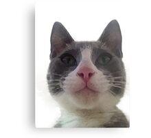Gracie Kitty Metal Print