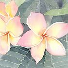 Pink Frangipani by Michelle Gilmore