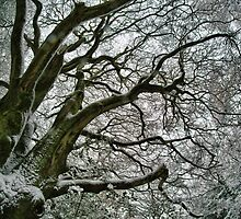 Limbs of a tree in winter by Guy Carpenter
