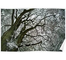 Limbs of a tree in winter Poster