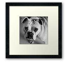 Bulldog Sadface Framed Print