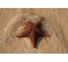 Starfish, Rose Island, Bahamas Photographic Print