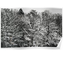 The edge of the winter forest Poster