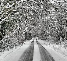 Snowy road under the trees by Guy Carpenter