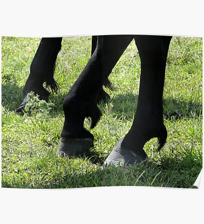 Posed Hooves Poster