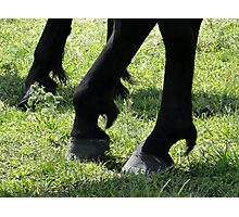 Posed Hooves Photographic Print