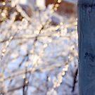 Iced by LadyFi