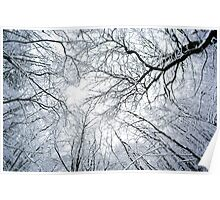 Snowy canopy of trees Poster