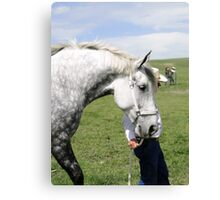 The Old Grey Mare II Canvas Print