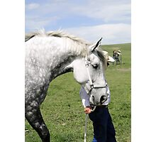 The Old Grey Mare II Photographic Print