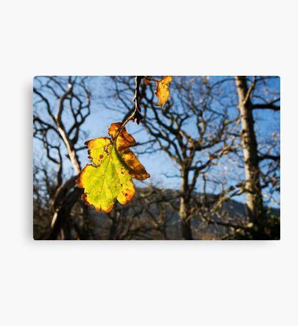 Autumn Oak Leaf Canvas Print