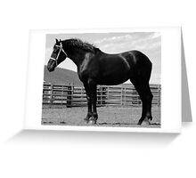 Black Beauty - Percheron Mare Greeting Card