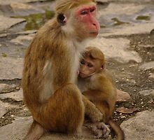Sri Lankan Mother and Baby Monkey by Barryyoung