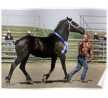 Young Mare Presentation Poster