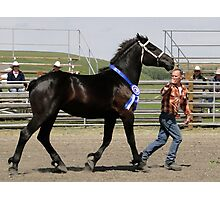 Young Mare Presentation Photographic Print