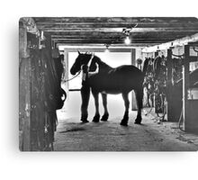Undressing In The Barn Canvas Print