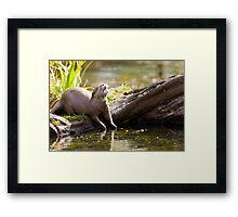 The Jolly Otter Framed Print