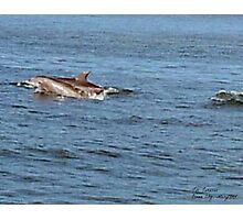 Dolphin Too Photographic Print