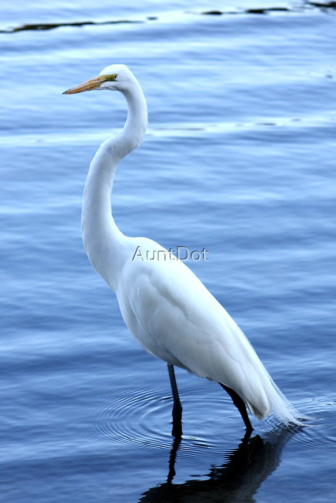Great Egret Standing Tall by AuntDot