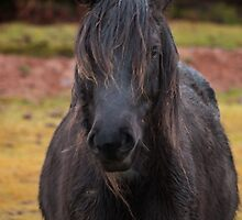 Another bad hair day by David Ford Honeybeez photo