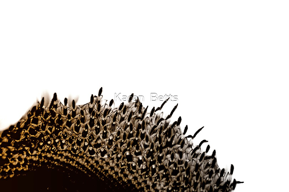 Sunflower center Abstract by Karen  Betts