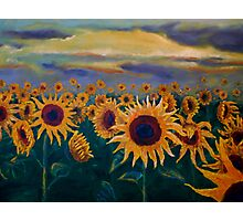 Sunflowers Photographic Print
