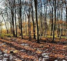Winter Woodland at Sunset by Guy Carpenter
