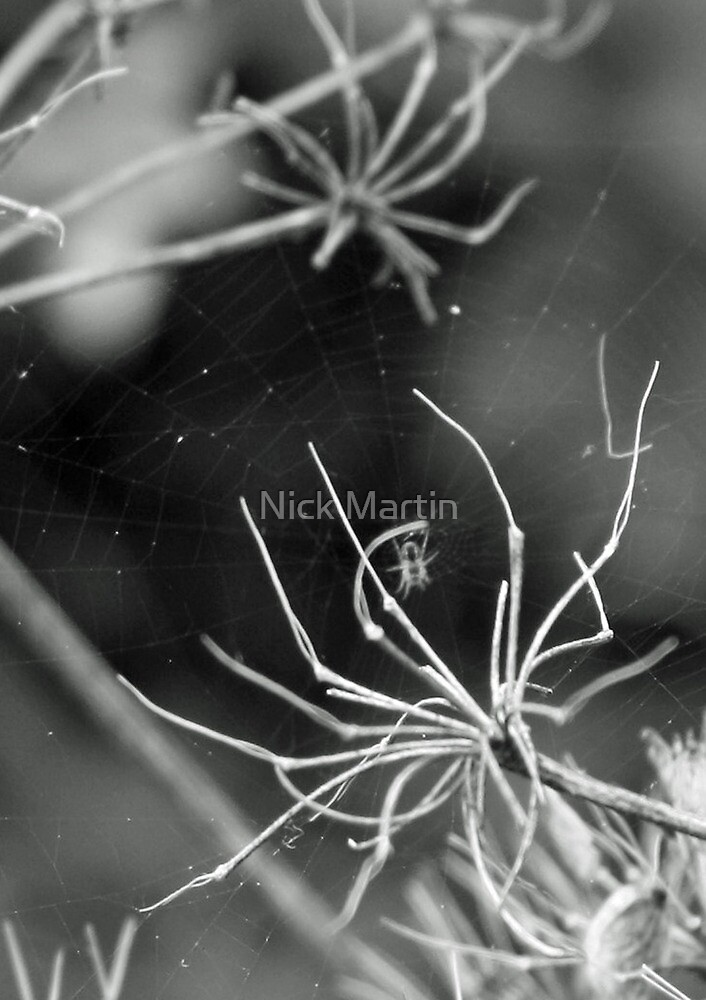 Spiders Web by Nick Martin