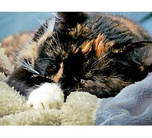 Sammie Sleeping  Photographic Print