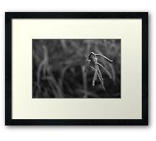 paspalum Framed Print