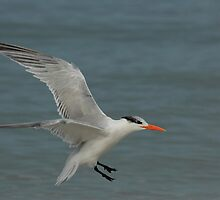 coming in for a landing by kathy s gillentine