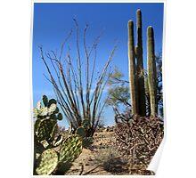 Nature's Cactus Garden Poster