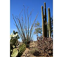 Nature's Cactus Garden Photographic Print