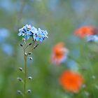 Memories of Spring by Sarah-fiona Helme