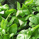 Amazingly Green Basil by Janie. D