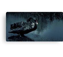 Sad Black Swan Canvas Print
