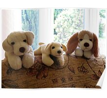 Cute K9 Toys Poster