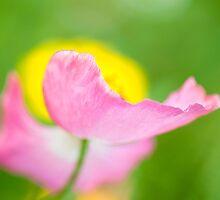 Revealing Secrets by Sarah-fiona Helme